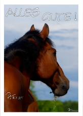 Postkarte Pferd Alles Gute