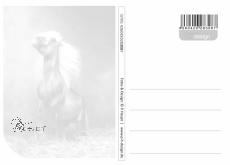 Postkarte Pferd Mähne