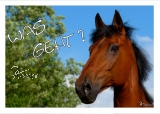 Postkarte Pferd - WAS GEHT?