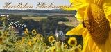 Glückwunsch - Sonnenblume
